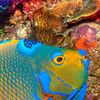 Bonaire : 4 galleries with 106 photos